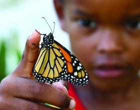 Building-a-Butterfly-Garden-004-