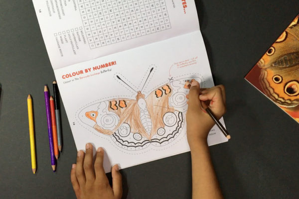 Butterfly Activity Book Released
